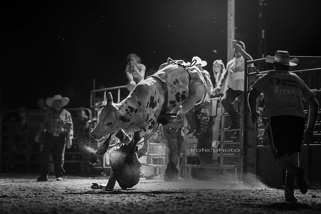 Choctaw Bingo the bull. Bulls and Barrels at Stokes GSR Arena. June 2017. Polk City. FL